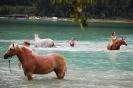 Pferde-Schwimmen Achensee 2016 (Fotos: Marina Sprenger)